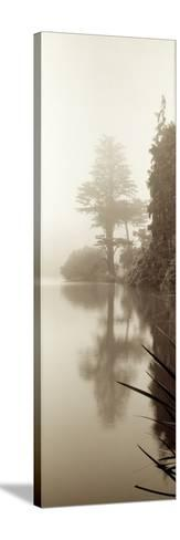 Lakeside Tree #2-Alan Blaustein-Stretched Canvas Print