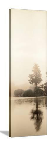 Lakeside Tree #1-Alan Blaustein-Stretched Canvas Print