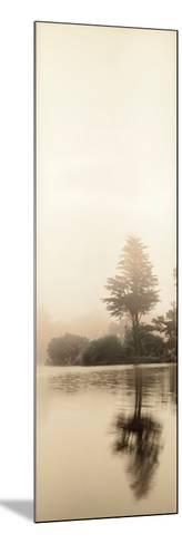 Lakeside Tree #1-Alan Blaustein-Mounted Photographic Print
