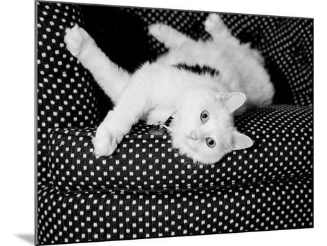 Birdie-Kim Levin-Mounted Photographic Print