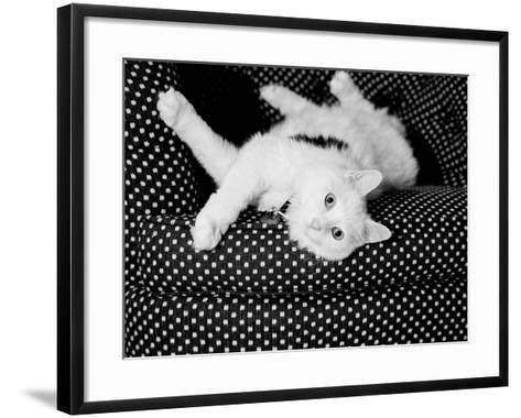 Birdie-Kim Levin-Framed Art Print