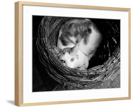 Picasso-Kim Levin-Framed Art Print