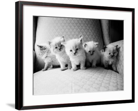 Five Kittens-Kim Levin-Framed Art Print