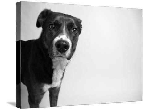 Reilly-Kim Levin-Stretched Canvas Print