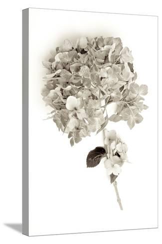 Garden Bloom #10-Alan Blaustein-Stretched Canvas Print
