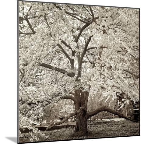 Hampton Magnolia #2-Alan Blaustein-Mounted Photographic Print