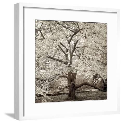 Hampton Magnolia #2-Alan Blaustein-Framed Art Print