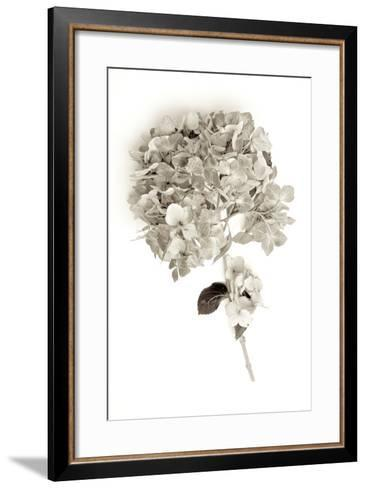 Garden Bloom #10-Alan Blaustein-Framed Art Print