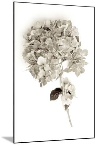 Garden Bloom #10-Alan Blaustein-Mounted Photographic Print