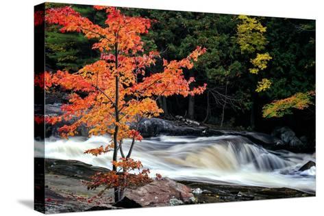 Autumn, Lower Rosseau Falls-David W^ Pollard-Stretched Canvas Print