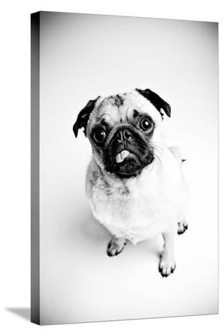 Piggie 7-Susan Sabo-Stretched Canvas Print