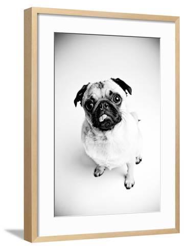 Piggie 7-Susan Sabo-Framed Art Print