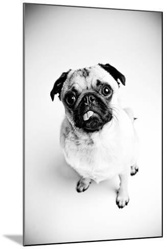Piggie 7-Susan Sabo-Mounted Photographic Print