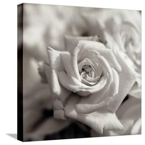 Florison #30-Alan Blaustein-Stretched Canvas Print