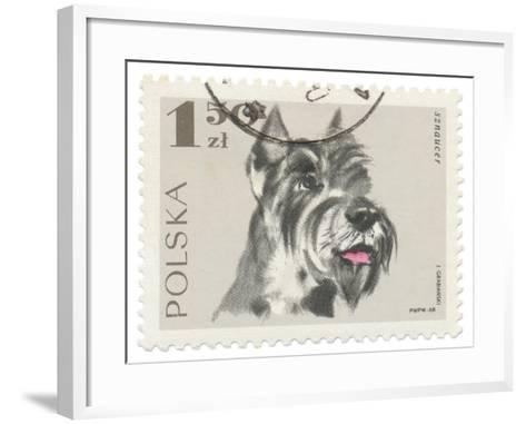 Poland Stamp I on White-Wild Apple Portfolio-Framed Art Print