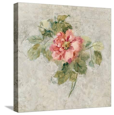 Provence Rose II Red and Neutral-Cheri Blum-Stretched Canvas Print