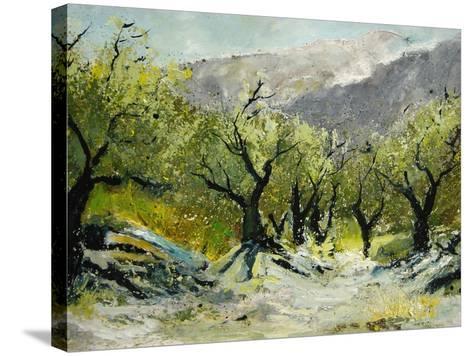 Olivetrees-Pol Ledent-Stretched Canvas Print