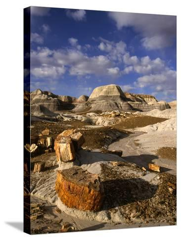 Petrified Forest II-Charles Bowman-Stretched Canvas Print