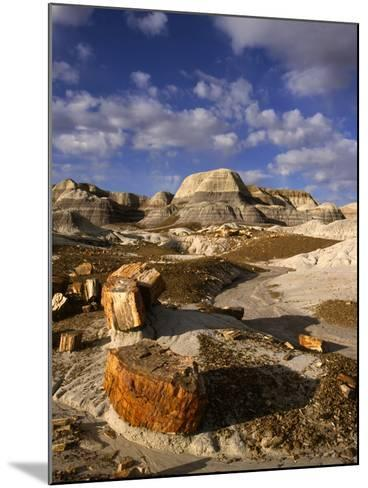 Petrified Forest II-Charles Bowman-Mounted Photographic Print