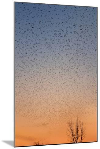 Mississippi Flyway-Steve Gadomski-Mounted Photographic Print