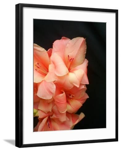 Gladiolas-Ruth Palmer 3-Framed Art Print
