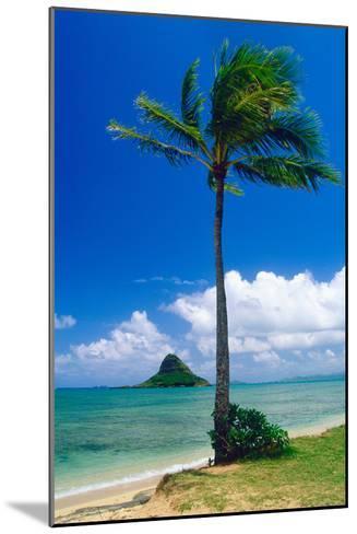 Kaneohe Bay Palm Tree, Hawaii-George Oze-Mounted Photographic Print