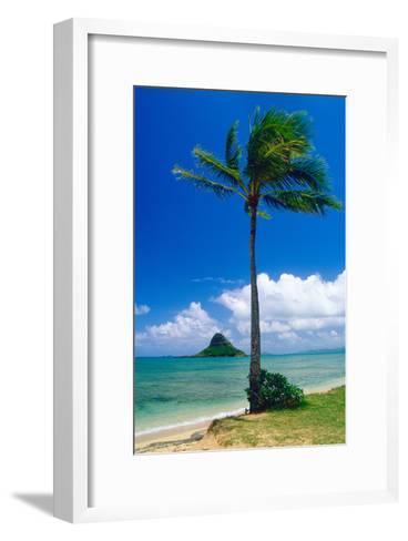 Kaneohe Bay Palm Tree, Hawaii-George Oze-Framed Art Print