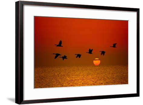 Sunrise Flight-Steve Gadomski-Framed Art Print