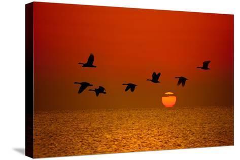 Sunrise Flight-Steve Gadomski-Stretched Canvas Print