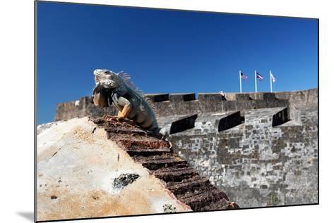 Iguana Basking, San Cristobal Fort, San Juan, PR-George Oze-Mounted Photographic Print