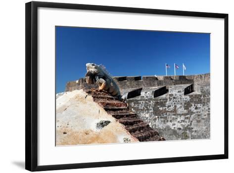 Iguana Basking, San Cristobal Fort, San Juan, PR-George Oze-Framed Art Print