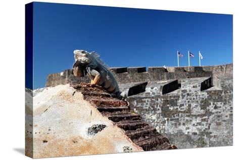Iguana Basking, San Cristobal Fort, San Juan, PR-George Oze-Stretched Canvas Print