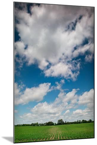 Midwest Corn Field-Steve Gadomski-Mounted Photographic Print