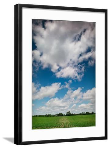 Midwest Corn Field-Steve Gadomski-Framed Art Print