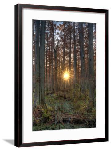 Heron Pond Sunrise-Steve Gadomski-Framed Art Print