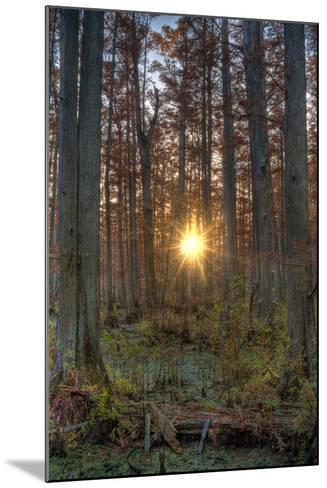 Heron Pond Sunrise-Steve Gadomski-Mounted Photographic Print