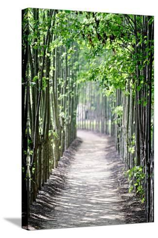 Path in the Woods-George Oze-Stretched Canvas Print