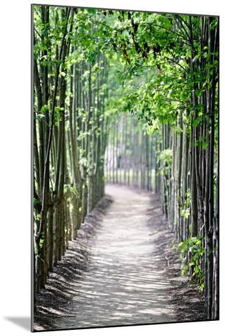 Path in the Woods-George Oze-Mounted Photographic Print
