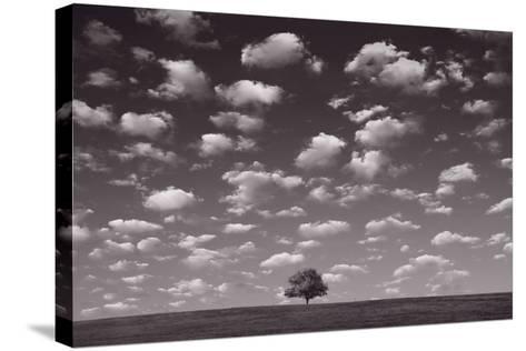 Lone Tree Morning In BW-Steve Gadomski-Stretched Canvas Print