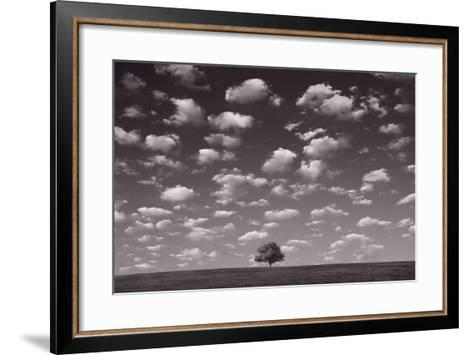 Lone Tree Morning In BW-Steve Gadomski-Framed Art Print