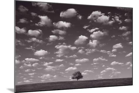 Lone Tree Morning In BW-Steve Gadomski-Mounted Photographic Print
