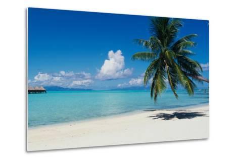 Palm Tree On The Beach, Moana Beach, Bora Bora, Tahiti, French Polynesia--Metal Print