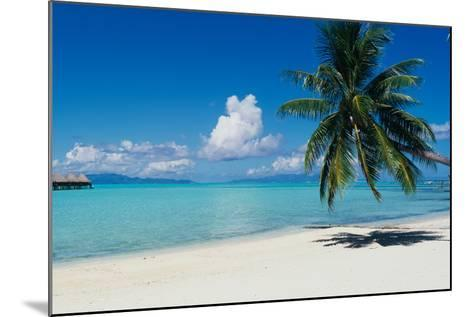 Palm Tree On The Beach, Moana Beach, Bora Bora, Tahiti, French Polynesia--Mounted Photographic Print