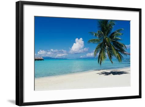 Palm Tree On The Beach, Moana Beach, Bora Bora, Tahiti, French Polynesia--Framed Art Print
