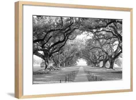 USA, Louisiana, New Orleans, brick path through alley of oak trees--Framed Art Print