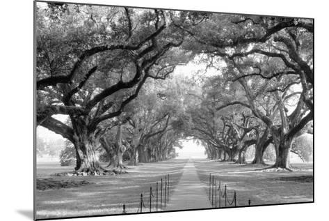 USA, Louisiana, New Orleans, brick path through alley of oak trees--Mounted Photographic Print