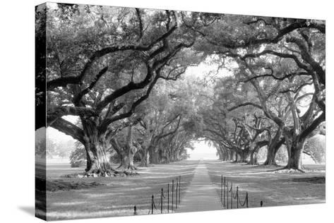 USA, Louisiana, New Orleans, brick path through alley of oak trees--Stretched Canvas Print