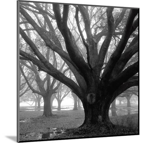 Oak Grove, Winter-William Guion-Mounted Photographic Print