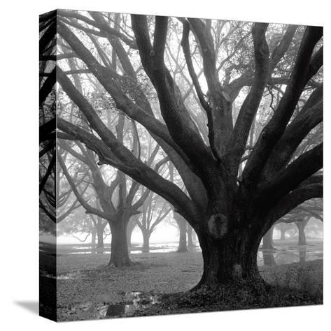 Oak Grove, Winter-William Guion-Stretched Canvas Print