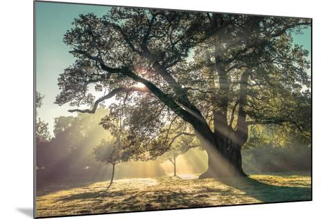 Breaking Through-Assaf Frank-Mounted Photographic Print